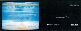背及びのスタート・ターン時に用いられる「バサロ泳法」の熟練者(オリンピック金メダリスト)と未熟練者の違いを比較